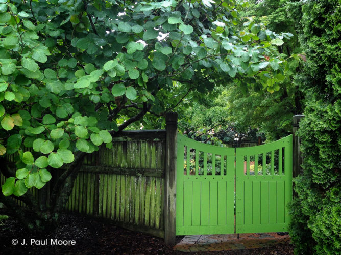 pvc-gate-painted-green